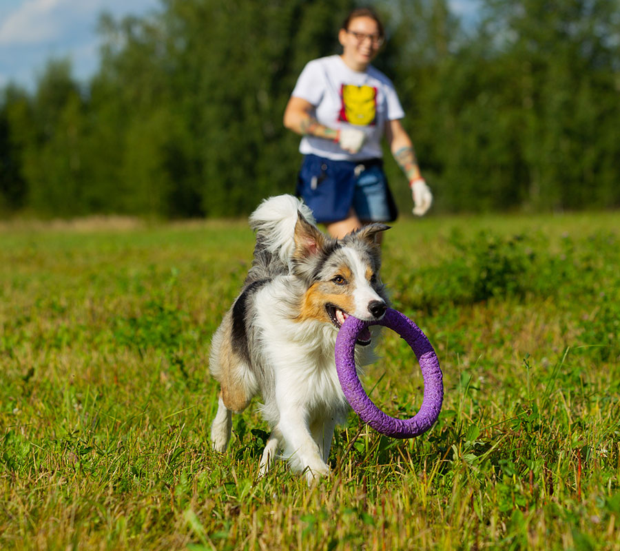 Methoden-des-Hundetrainings
